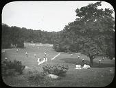 view [Franklin Park]: the lawn tennis courts in Ellicott Dale digital asset: [Franklin Park] [lantern slide]: the lawn tennis courts in Ellicott Dale.