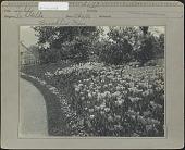 view [Weld Garden]: Tulips digital asset: [Weld Garden] [photoprint]