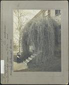 view [Harvard Botanic Garden] digital asset: [Harvard Botanic Garden]
