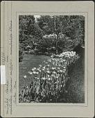 view Isabella Stewart Gardner Museum digital asset: Isabella Stewart Gardner Museum [photoprint]