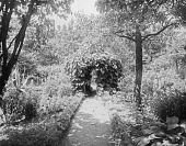 view [Miscellaneous Sites in Salem, Massachusetts]: the garden at 26 Chestnut Street, showing its unusual gazebo-like arbor of Dutchman's pipe. digital asset: [Miscellaneous Sites in Salem, Massachusetts] [glass negative]: the garden at 26 Chestnut Street, showing its unusual gazebo-like arbor of Dutchman's pipe.