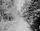 view [Miscellaneous Sites in Salem, Massachusetts]: the George B. Chase garden, looking down toward Salem Harbor. digital asset: [Miscellaneous Sites in Salem, Massachusetts] [glass negative]: the George B. Chase garden, looking down toward Salem Harbor.