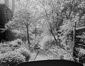 view [Miscellaneous Sites in Salem, Massachusetts]: the side garden at 26 Chestnut Street, looking toward 27 Chestnut Street in the distance. digital asset: [Miscellaneous Sites in Salem, Massachusetts] [glass negative]: the side garden at 26 Chestnut Street, looking toward 27 Chestnut Street in the distance.