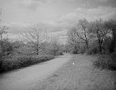 view [The Riverway]: an unpaved road in early spring. digital asset: [The Riverway] [glass negative]: an unpaved road in early spring.