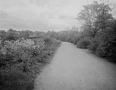view [The Riverway]: looking along a path toward houses in the background. digital asset: [The Riverway] [glass negative]: looking along a path toward houses in the background.