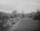 view [The Riverway]: looking along a path with houses visible in the far distance. digital asset: [The Riverway] [glass negative]: looking along a path with houses visible in the far distance.