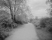view [The Riverway]: a footpath and bench. digital asset: [The Riverway] [glass negative]: a footpath and bench.