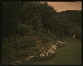view Thompson Garden: garden borders on a hillside. digital asset: Thompson Garden: garden borders on a hillside.: [1928?]