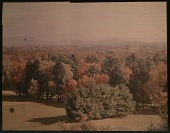 view Thompson Garden: panoramic view of evergreens and other trees. digital asset: Thompson Garden: panoramic view of evergreens and other trees.: [1928?]