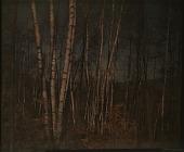 view Thompson Garden: birch trees in autumn. digital asset: Thompson Garden: birch trees in autumn.: [1928?]
