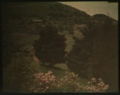 view Thompson Garden: conifers and other flowering trees on a hillside. digital asset: Thompson Garden: conifers and other flowering trees on a hillside.: [1928?]