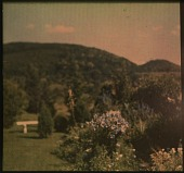 view Thompson Garden: flowering shrubs and bench; hills in the background. digital asset: Thompson Garden: flowering shrubs and bench; hills in the background.: [1928?]