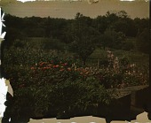 view Thompson Garden: container gardening at the bottom of the hill. digital asset: Thompson Garden: container gardening at the bottom of the hill.: [1928?]