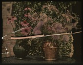 view Thompson Garden: flower arrangements of allium and rudbeckia. digital asset: Thompson Garden: flower arrangements of allium and rudbeckia.: [1928?]