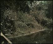 view Thompson Garden: riverbank in summer. digital asset: Thompson Garden: riverbank in summer.: [1928?]