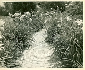 view [Buttrick Mansion]: daylily path. digital asset: [Buttrick Mansion] [photoprint]: daylily path.