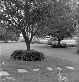 view [Patten Garden]: view across lawn, showing hosta at base of trees and daylily border beyond. digital asset: [Patten Garden] [safety film negative]: view across lawn, showing hosta at base of trees and daylily border beyond.