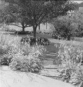view [Patten Garden]: flagstone stepping stones leading through hosta to lawn area. digital asset: [Patten Garden] [safety film negative]: flagstone stepping stones leading through hosta to lawn area.