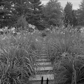 view [Patten Garden]: daylily border and bed. digital asset: [Patten Garden] [safety film negative]: daylily border and bed.