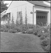 view [Patten Garden]: border near house. digital asset: [Patten Garden] [safety film negative]: border near house.