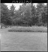 view [Patten Garden]: daylily beds, border, and lawn area. digital asset: [Patten Garden] [safety film negative]: daylily beds, border, and lawn area.