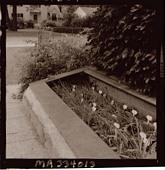 view [Sheldon Garden]: modified cold frame for propagating daylilies. digital asset: [Sheldon Garden] [safety film negative]: modified cold frame for propagating daylilies.