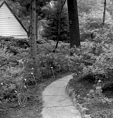 view [Sheldon Garden]: garden path with daylilies on left. digital asset: [Sheldon Garden] [safety film negative]: garden path with daylilies on left.