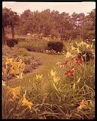 view [Merry Garden]: daylilies, grass walkways, and garden borders. digital asset: [Merry Garden] [film transparency]: daylilies, grass walkways, and garden borders.