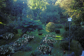 view [Manker Arboretum]: two rows of perennials and flowering shrubs in shade. digital asset: [Manker Arboretum]: two rows of perennials and flowering shrubs in shade.: 2004.