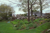 view [Ship Oak Farm]: flower garden with view beyond stone fence to cottage and barn. digital asset: [Ship Oak Farm]: flower garden with view beyond stone fence to cottage and barn.: 2004 Apr.