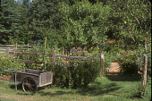 view [Old Jenifer House]: entrance to vegetable garden during summer with garden way cart. digital asset: [Old Jenifer House]: entrance to vegetable garden during summer with garden way cart.: 2005.