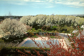 view [Blue Fish Inn Garden]: Bradford pear trees in bloom surrounding property and swimming pool. digital asset: [Blue Fish Inn Garden]: Bradford pear trees in bloom surrounding property and swimming pool.: 2006 Apr.