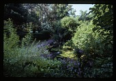 view [Grey Gardens]: the lily pond can be viewed from the grassy terrace. digital asset: [Grey Gardens]: the lily pond can be viewed from the grassy terrace.: 2007.