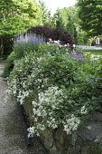 view [Brattle Street Garden]: looking across the garden from the fountain in the mixed border to the woodland shade garden. digital asset: [Brattle Street Garden]: looking across the garden from the fountain in the mixed border to the woodland shade garden.: 2012 May.