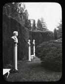 view Unidentified Garden in Unknown Location: Cedrus hedge in Italian Garden. digital asset: Unidentified Garden in Unknown Location [slide]: Cedrus hedge in Italian Garden.