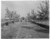 view [Holly Beach Farm]: a grass path with newly planted trees on either side. digital asset: [Holly Beach Farm] [glass negative]: a grass path with newly planted trees on either side.