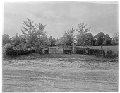 view [Holly Beach Farm]: looking from a road toward a grass path lined with newly planted trees. digital asset: [Holly Beach Farm] [glass negative]: looking from a road toward a grass path lined with newly planted trees.