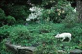 view [Hubbard Garden]: Exbury azaleas. digital asset: [Hubbard Garden]: Exbury azaleas.: 1996 May.
