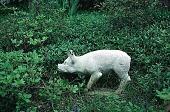 """view [Hubbard Garden]: a """"truffle hound"""" (pig sculpture). digital asset: [Hubbard Garden]: a """"truffle hound"""" (pig sculpture).: 1996 May."""