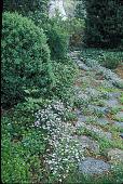 view [Voorhees Garden]: side garden in spring. digital asset: [Voorhees Garden]: side garden in spring.: 2000 May.