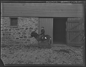 view [Tanglewood]: Walter Liebig on a donkey. digital asset: [Tanglewood] [glass negative]: Walter Liebig on a donkey.
