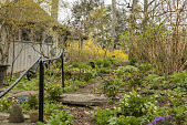 view [Clare and Van Stewart Garden]: The path to the potting shed with spring bulbs and hellebores, metal sculptures and forsythia blooming in the distance. digital asset: [Clare and Van Stewart Garden]: The path to the potting shed with spring bulbs and hellebores, metal sculptures and forsythia blooming in the distance.: 2018 April 17