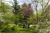 view [Clare and Van Stewart Garden]: Looking from the sunroom lawn to the swimming pool and lawn beyond the woodland gardens. digital asset: [Clare and Van Stewart Garden]: Looking from the sunroom lawn to the swimming pool and lawn beyond the woodland gardens.: 2018 May 6