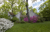 view [Clare and Van Stewart Garden]: When the mid-century house was built, all but one mature tree was left standing. digital asset: [Clare and Van Stewart Garden]: When the mid-century house was built, all but one mature tree was left standing.: 2018 May 10