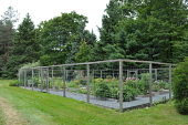 view [Aldersea]: the cutting garden of herbs and flowers, all enclosed by deer fencing. digital asset: [Aldersea]: the cutting garden of herbs and flowers, all enclosed by deer fencing.: 2013 Aug.