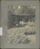 view [Kenarden]: Heliotropium. digital asset: [Kenarden] [photoprint] Heliotropium.