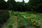 view [Kenarden]: Beans climb up poles and cover a tunnel in the vegetable and cutting garden. digital asset: [Kenarden]: Beans climb up poles and cover a tunnel in the vegetable and cutting garden.: 2010 Aug.