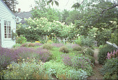 view [Garland Farm]: east side of main garden. digital asset: [Garland Farm]: east side of main garden.: 2003.