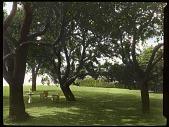 view Unidentified Garden in Grosse Pointe, Michigan digital asset: Unidentified Garden in Grosse Pointe, Michigan: [between 1914 and 1949?]