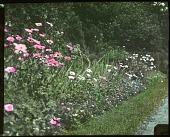 view Ferry Garden digital asset: Ferry Garden: 1926